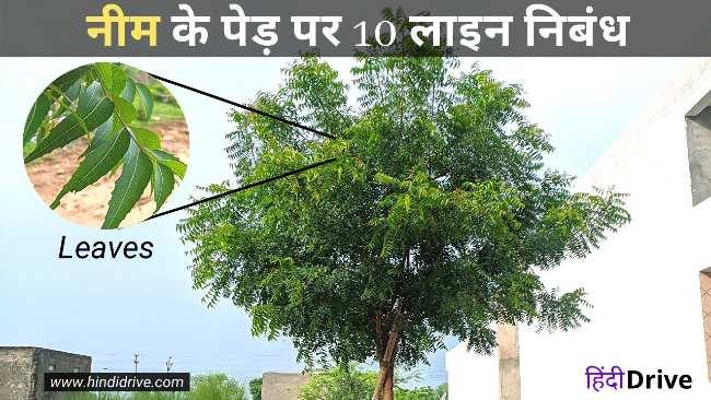 नीम के पेड़ पर 10 लाइन निबंध   10 Lines on Neem Tree in Hindi