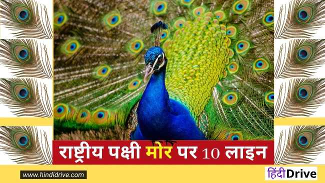 10 Lines on Peacock in Hindi। राष्ट्रीय पक्षी मोर पर 10 लाइन