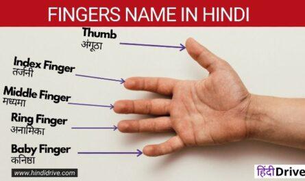 Fingers Name in Hindi