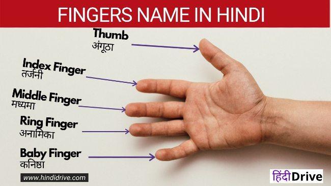 उंगलियों के नाम हिंदी में – 5 Fingers Name in Hindi, [2021]