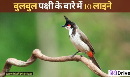 10 Lines On Bulbul In Hindi
