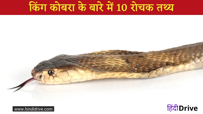 10 Interesting Facts about King Cobra Snake in Hindi