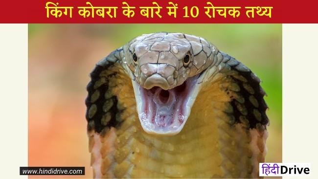 10 Interesting Facts about King Cobra Snake in Hindi किंग कोबरा 10 रोचक