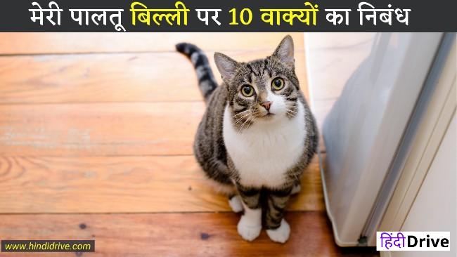 मेरी पालतू बिल्ली पर 10 वाक्यों का निबंध-10 Lines on My Pet Cat in Hindi