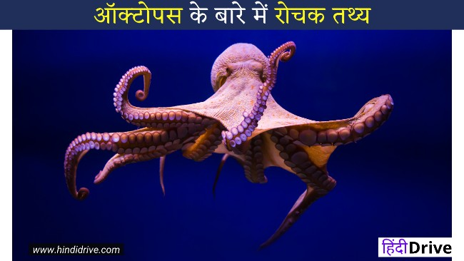 20+Interesting Facts About octopus In Hindi