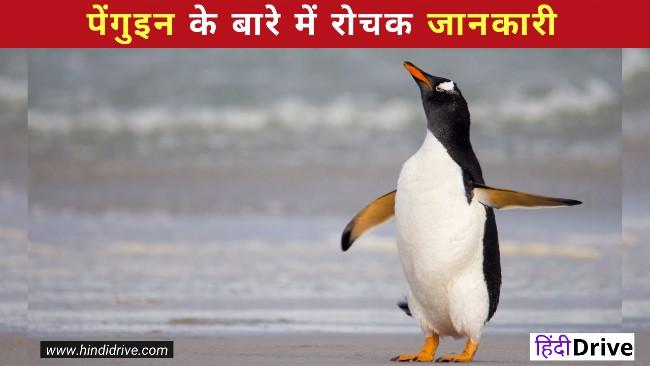 पेंगुइन के बारे में रोचक जानकारी- Information About Penguin In Hindi