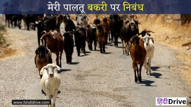 Short Essay on Goat in Hindi